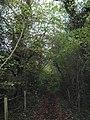 Bridleway in Scene Wood - geograph.org.uk - 2165891.jpg