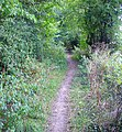 Bridleway near junction of Grouse Lane and Blackhouse Road, Colgate, West Sussex - geograph.org.uk - 53406.jpg