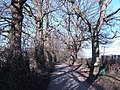 Bridleway off Fontridge Lane - geograph.org.uk - 333877.jpg