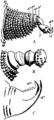Britannica 1911 Arthropoda - Peripatus parapodia.png