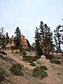 Bryce-Canyon-Nationalpark P4190573.jpg