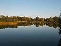 Bujtos Lake, mirror effect, 2017 Nyíregyháza.jpg