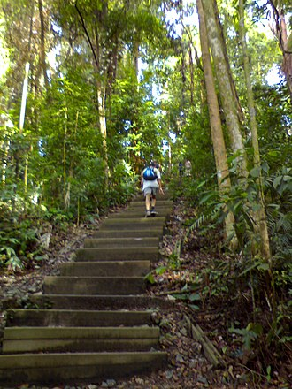 Bukit Timah Nature Reserve - Steps leading to the summit of Bukit Timah.
