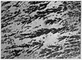 Bulletin 426 Plate XV B Leopardite quartz porphyry.jpg