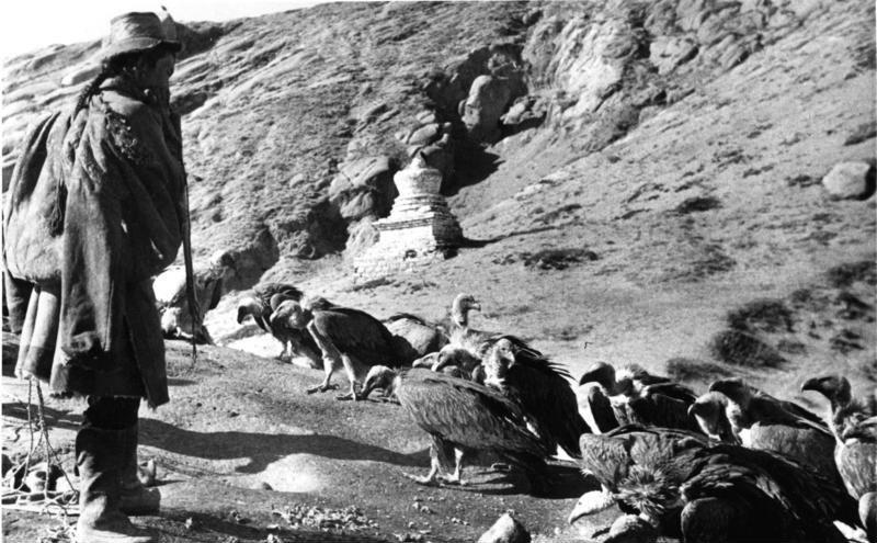 Bundesarchiv Bild 135-S-12-50-06, Tibetexpedition, Ragyapa, Geier