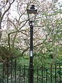 Burning gas lamp - geograph.org.uk - 1800195.jpg