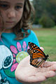 Butterfly with tag (6238195812).jpg