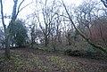 Caer Caradoc Woodland - geograph.org.uk - 2299043.jpg