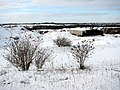 Caistor St Edmund chalk pit in the snow - geograph.org.uk - 1656960.jpg