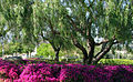 Cal State San Marcos (2503598318).jpg