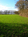Camberlot Wood - geograph.org.uk - 352686.jpg