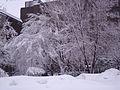 Campus UdeM sous la neige, Montréal 01.jpg