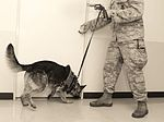 Canine teams hound victory at Top Dog competition 160516-F-RA202-189.jpg