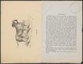 Canis lupus familiaris - 1700-1880 - Print - Iconographia Zoologica - Special Collections University of Amsterdam - UBA01 IZ22300057.tif