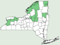 Carex crawei NY-dist-map.png