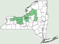 Carex gynocrates NY-dist-map.png