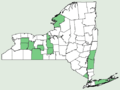 Carex willdenowii NY-dist-map.png