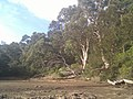 Caringbah South NSW 2229, Australia - panoramio.jpg