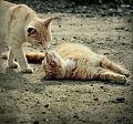 Cat 1111.jpg