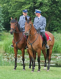 Central Silesian Park - Mounted police 02.jpg
