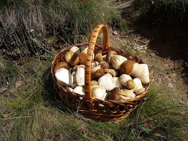 Тела 2-х грибников найдены около путей вЛенобласти