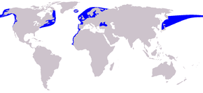 alt=Description de l'image Cetacea_range_map_Harbour_Porpoise.PNG.