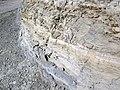 Chalk (Smoky Hill Chalk Member, Niobrara Formation, Upper Cretaceous; Castle Rock, south of Quinter, Kansas, USA) 91 (38496494124).jpg