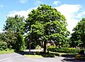 Chilton Village Green - geograph.org.uk - 1315997.jpg