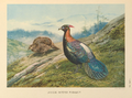 Chinese Impeyan Pheasant by George Edward Lodge.png