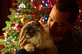 Christmas Cat - Flickr - Joe Parks.jpg