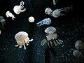 Churaumi Aquarium, Okinawa, Japan (35596032).jpg