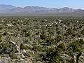 Cima Dome landscape 3.jpg