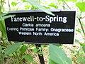 Clarkia amoena sign - Gardenology.org-IMG 0633 bbg09.jpg