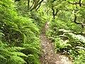 Coast path above Peppercombe - geograph.org.uk - 1430956.jpg