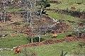 Coelheira - Portugal (25570556354).jpg