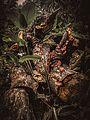 Cogumelos da Cachoeira das 7 Quedas.jpg