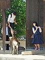 Collégiens en visite au Todai-ji (Nara, Japon) (28045977577).jpg