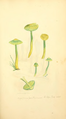 Coloured Figures of English Fungi or Mushrooms - t. 82.png