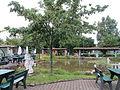 Contel hotel in Koblenz - cherries tree.JPG