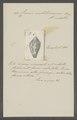 Conus mediterraneus - - Print - Iconographia Zoologica - Special Collections University of Amsterdam - UBAINV0274 085 10 0035.tif