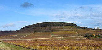 Corton (wine) - The Corton hill as seen from southwest. The Corton vineyards on this side of the hill are located in Aloxe-Corton.