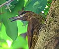 Costa Rica DSCN1258-new (31093357396).jpg