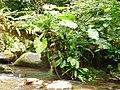 Cour d'eau et végétaux du Parc National de la Guadeloupe.jpg