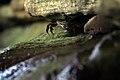 Crab finds shelter (6225521047).jpg