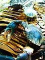 Crabs at Bawaka.jpg