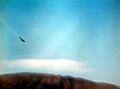 Crashing Japanese plane on Midway 1942.jpg
