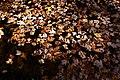 Creek-leaves-fall - West Virginia - ForestWander.jpg