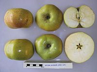 Cross section of Byford Wonder, National Fruit Collection (acc. 2000-024).jpg