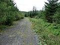 Crynant Forestry Walk, Hirfynydd - geograph.org.uk - 963822.jpg