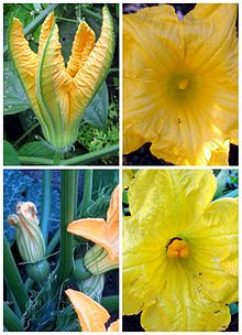 Partes De La Flor Y Su Funcion De Cada Una
